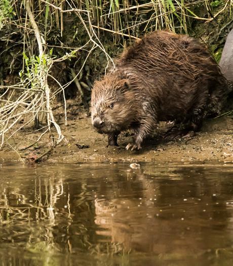 Nationaal Park De Biesbosch lanceert Biespas