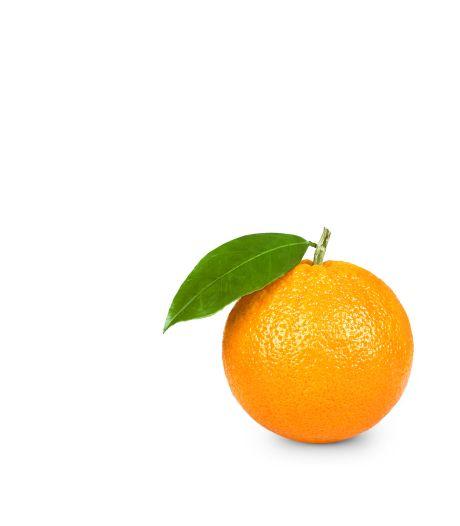 Studenten redden sinaasappelschillen en maken er 'orangecello' van