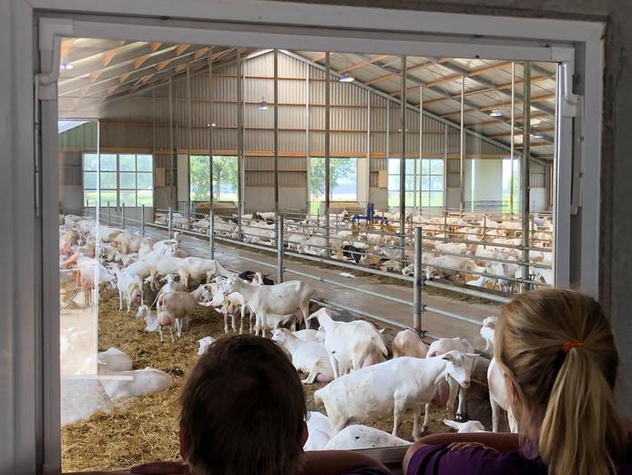 Een van de agrarische bedrijven op de route is een geitenhouderij.
