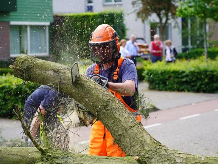 Grote boomtak valt dwars over de weg in Rijen