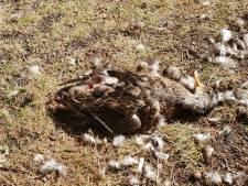 Apeldoorns Oranjepark na vondst dode eend nog geen 'botulismevijver'