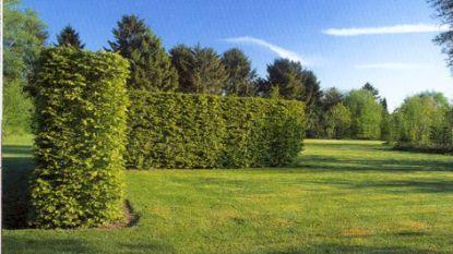 Gemeente wil groen kerkhof aanleggen in centrum
