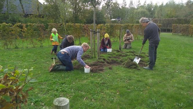 Bassevelde wordt volgend voorjaar kleurrijk: bewonersplatform plant 10.500 biologische bloembollen