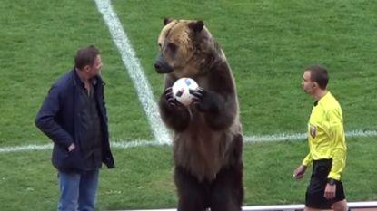 Vorm van dierenmishandeling? Beer entertaint Russische fans door te applaudiseren en de bal aan de scheids te geven