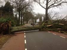 VVD Wageningen wil snel actie na stormschade