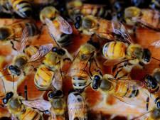 Dorpsboomgaard en bijenweide in Huissen van de baan
