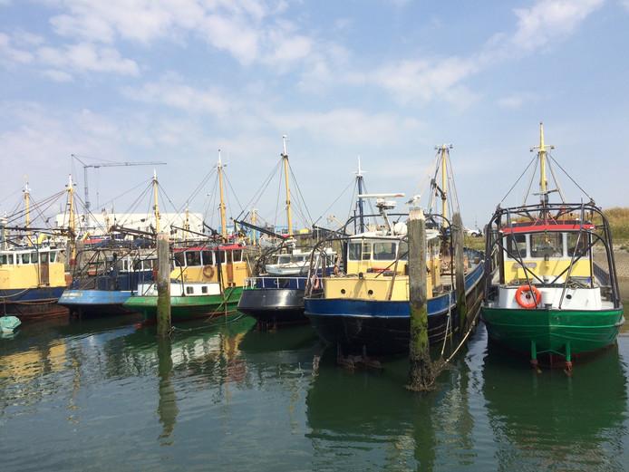 De Julianahaven in Yerseke is bij laag water volgens de VVD moeilijk te bereiken voor mosselkotters.