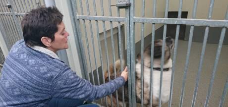 Osse opvang in de ban van gedumpte husky's: 'Onvoorstelbaar dat iemand dit doet'