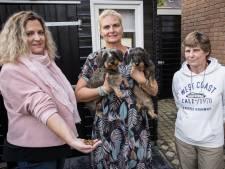 Piershil in de ban van hondenbrokkenmysterie: Dierenambulance grijpt in