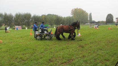 Dag van het Brabants Trekpaard palmt Vollezele in (met rist aan activiteiten)
