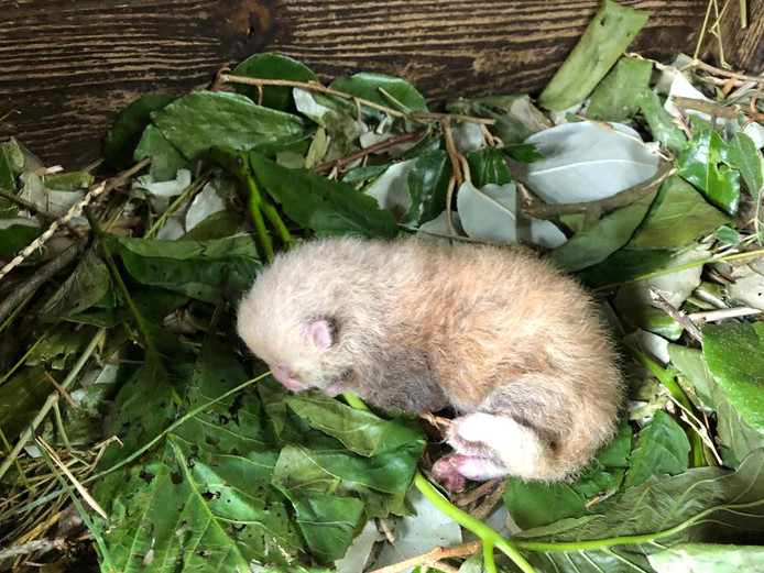 C'est le premier bébé de Yin (sa maman) et Mojo (son papa).