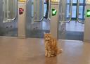 Stationskat Sunny verwelkomt reizigers bij de toegangspoortjes.
