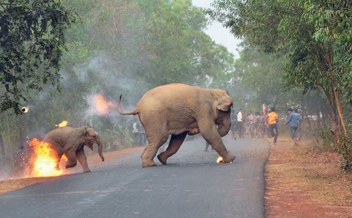'Hell is Here' van fotograaf Biplab Hazra won de prijs 'Sanctuary's Wildlife Photographer of the Year'