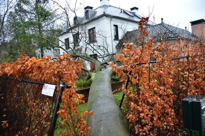 Op een huis in de Montenslaan in Breda is een grote boom gevallen.