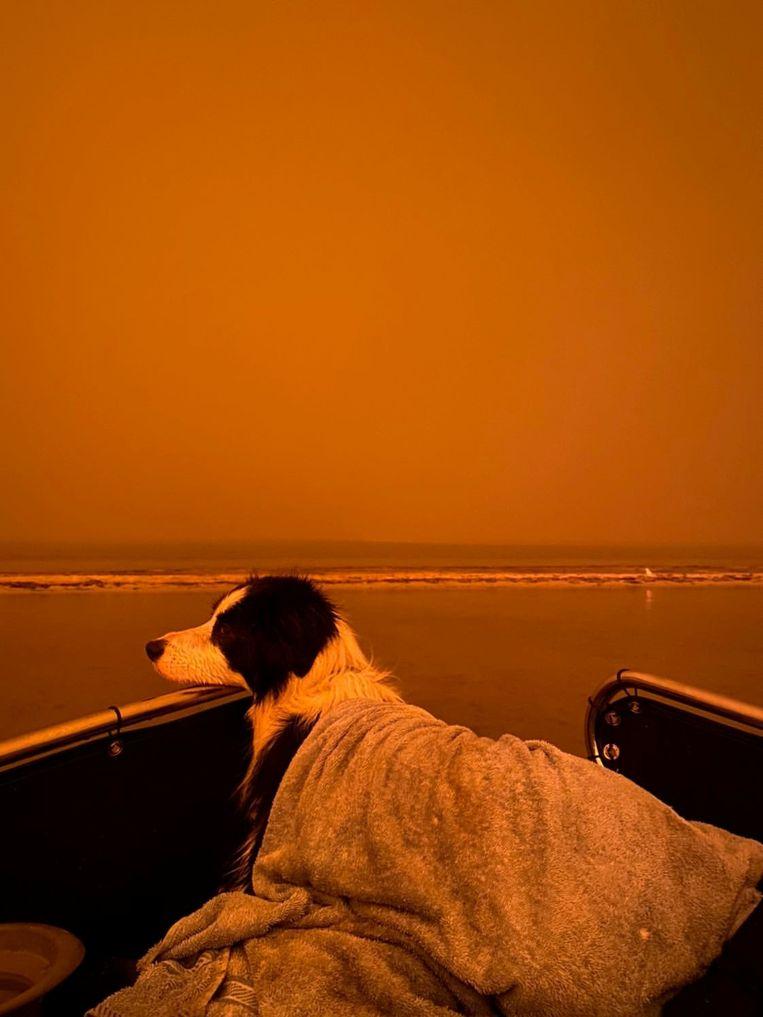 Een hond onder een dekentje in Mallacoota.