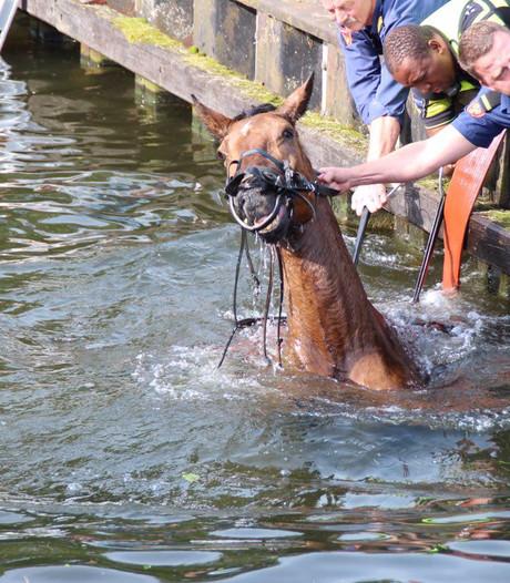Paard valt in het kanaal in Aadorp