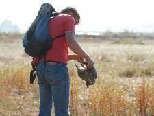Meeuwen in Moerdijk bezwijken door de droogte
