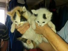Gedumpte kittens en honden gered, dood konijn in plastic tas