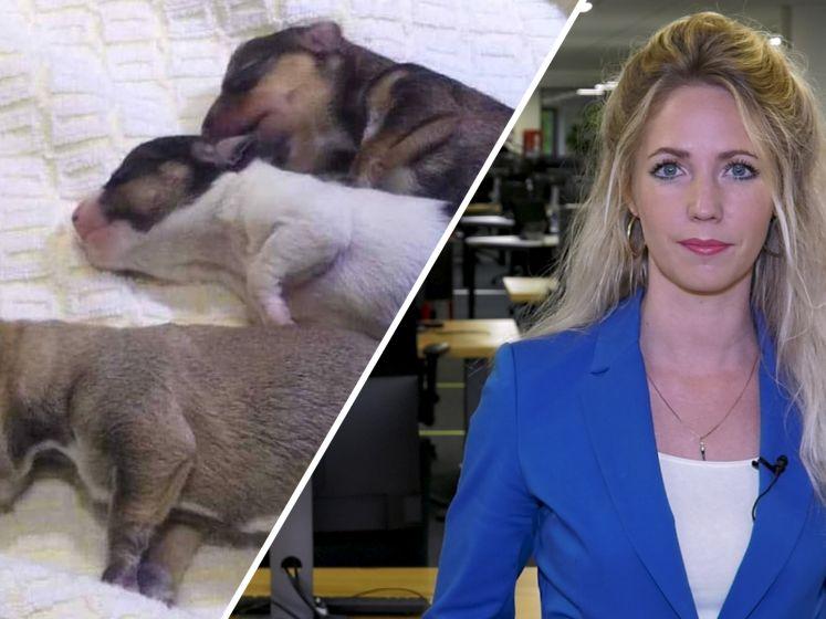de Stentor Nieuws Update: Zwarte dag voor Frankrijk en wie dumpte deze puppy's?