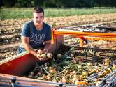 Boeren in de stress om hitte: 'Tarwe brandt gewoon weg'