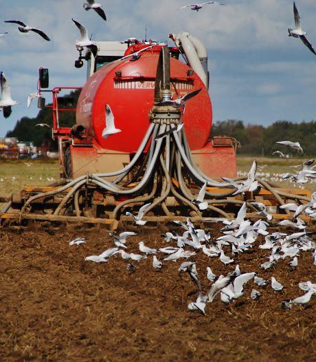Provincies openen transfermarkt: vechten om stikstofrechten van stoppende boeren