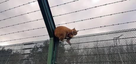 Kat zit vast in hekwerk vliegbasis Woensdrecht