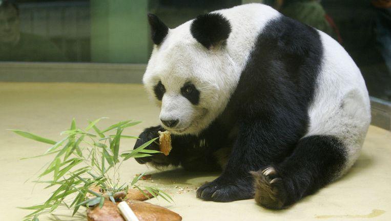 Laatste Panda In Berlijnse Zoo Is Overleden Dieren Wetenschap