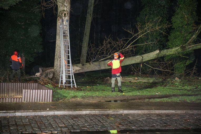 Bomen in het Wielewaalpark dreigen om te vallen op straat. De groendienst legt ze om.