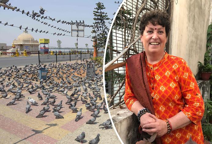 Petra van der Wal uit Dedemsvaart zit vast in India, nu ook daar de coronapandemie om zich heen slaat. Op straat is het na de totale lockdown stil en nemen de duiven het over.