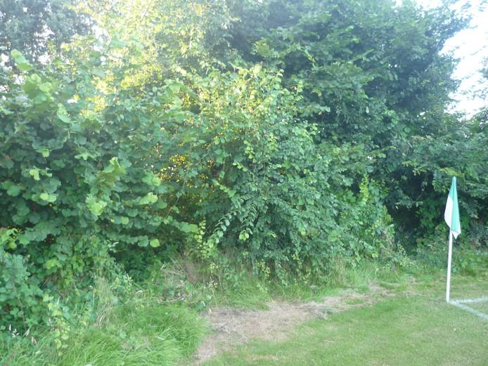 Groen overwoekert het sportpark in Mariaheide.