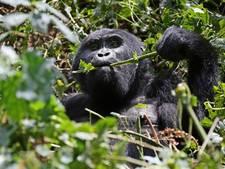 Rabobank in actie tegen ontbossing