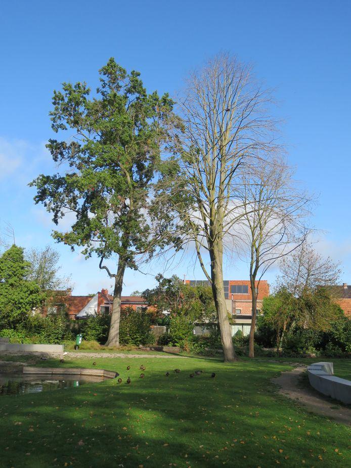 Verschillende bomen in park Vande Walle staan er vrij doods bij.