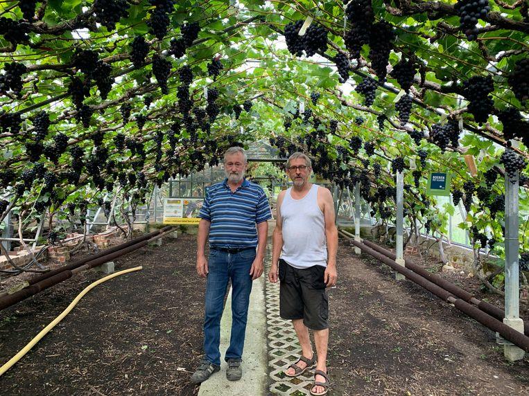 Pips en Flups Luppens in hun wijngaard.