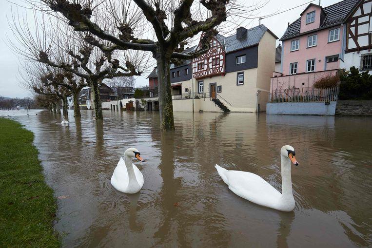 Ganzen zwemmen door een ondergelopen straat in het dorpje Leutesdorf in Duitsland. De Rijn is er buiten haar oevers getreden.