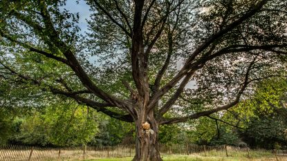 Gsm's inzamelen om bomen aan te planten