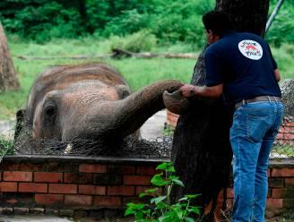 """""""Eenzaamste olifant"""" kan na 35 jaar in kleine kooi naar betere thuis gebracht worden"""