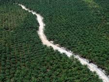 Greenpeace: Unilever koopt palmolie van bosverbranders