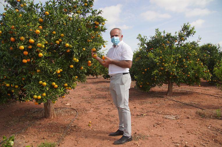 Beeld voor buitenlandverhaal over Spaanse sinaasappelboer. Beeld Alex Tieleman