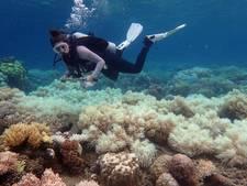 Australië trekt 40 miljoen euro uit om Great Barrier Reef te redden