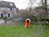 Boom omgewaaid in Kasteellaan Eindhoven