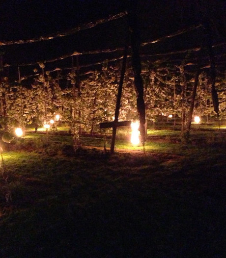 Vuurpotten houden kou weg bij de kersenbomen