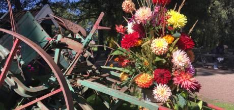 Duizenden dahlia's kleuren Wendezoele in Ambt Delden tijdens heus NK