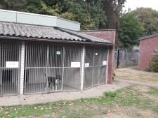 Crisis kost dierentehuis Den Bosch fors geld