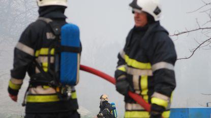Politie start onderzoek naar brandstichting dertigtal dennenbomen