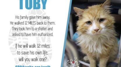 Kat loopt 20 kilometer terug naar huis nadat baasjes hem weggeven. En wordt vervolgens naar asiel gebracht voor spuitje