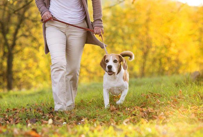 """""""Wie een hond heeft, is fysiek actiever, heeft een beter voedingspatroon en een betere bloeddruk"""", blijkt uit een grootschalig onderzoek."""