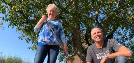 Een honderd jaar oude boom geeft een prima notenoogst, en de hele buurt raapt mee