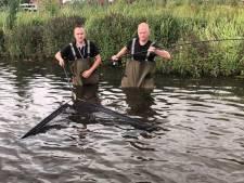 'Meerval zorgt voor minder vangst bij viswedstrijden'