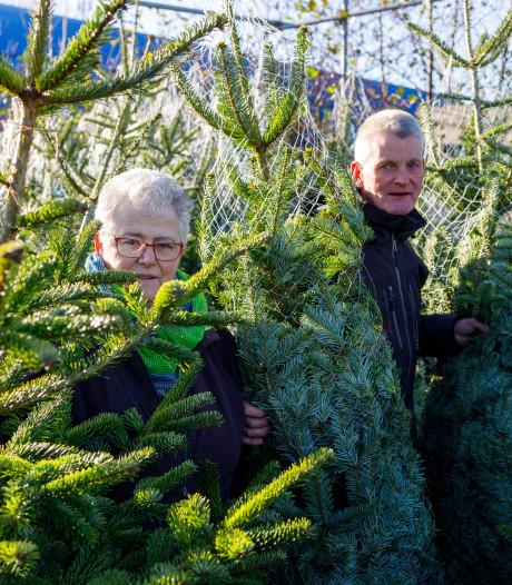 Nog voor Sinterklaas al een run op kerstbomen, maar dan wel een echte
