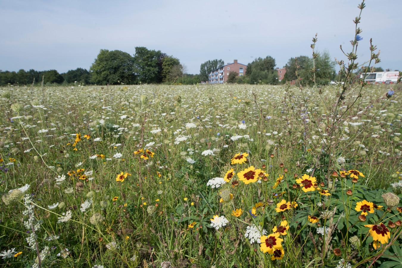 Het braakliggende stuk grond tussen de Henriëtte Roland Holstlaan, de Nijreessingel, de Weezebeek en Bornebroeksestraat, waar Hornbach moet komen.
